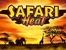 Safari Heat без регистрации